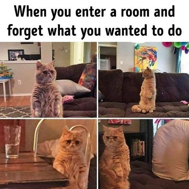 Confused cat. When you enter a room and forget what you wanted to do.