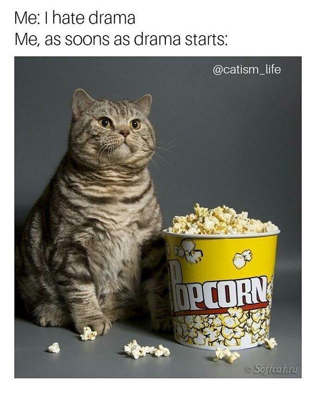 Cat with popcorn