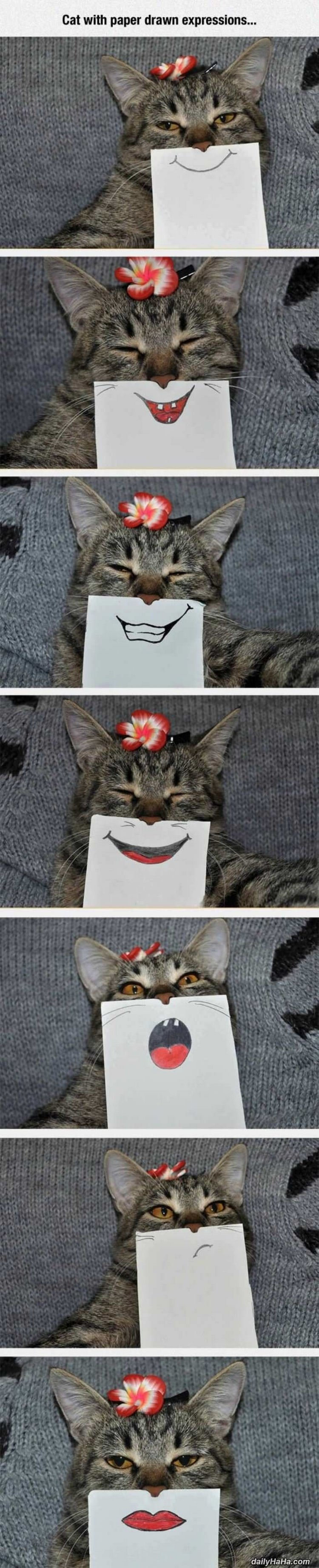 44 Incredibly Funny Pictures That Will Make You Smile - Cats are so funny with drawn expressions.