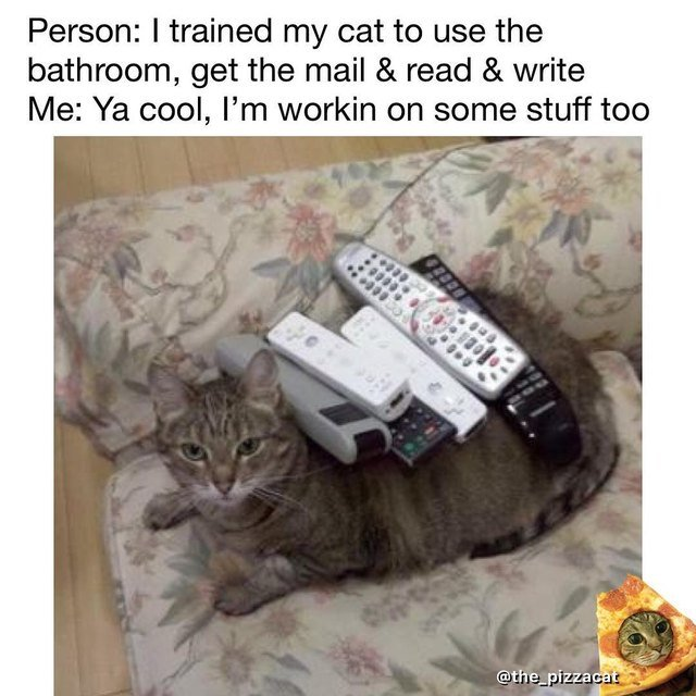 Cat covered in remote controls.