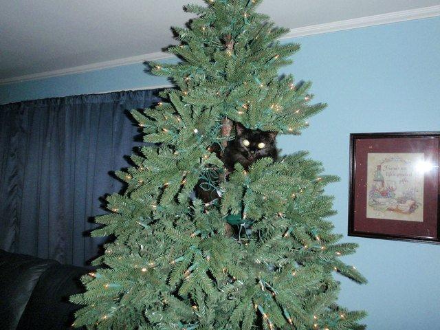 Cat hiding in Christmas tree