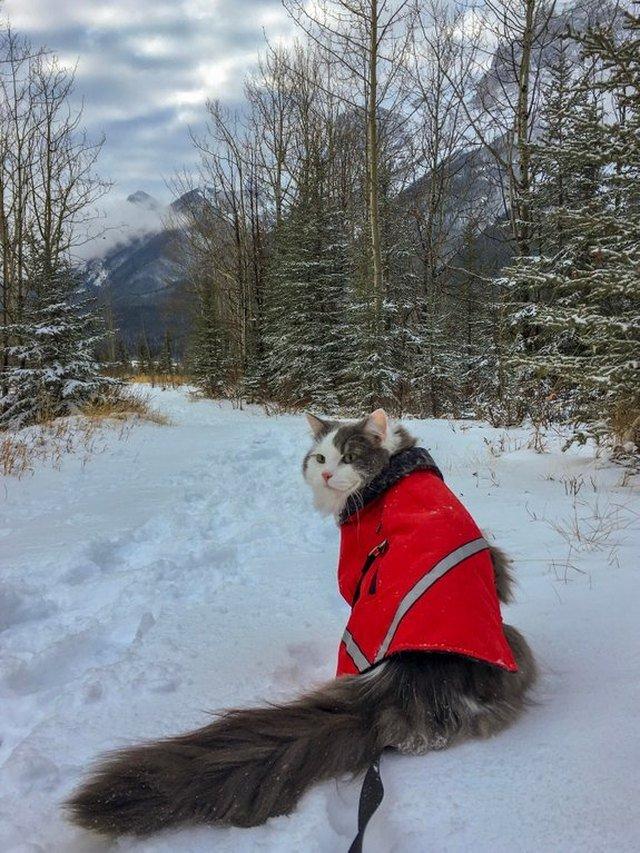 Cat sitting in snow.