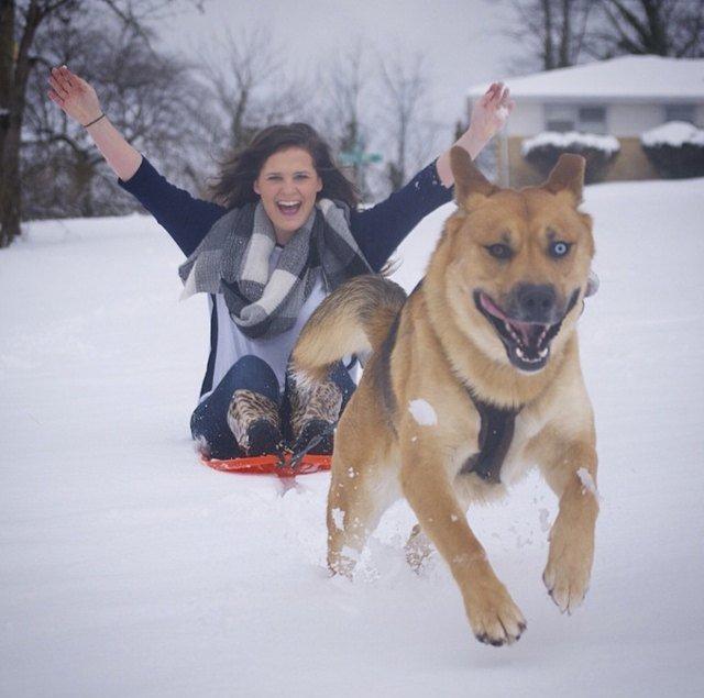 Dog pulling sled through snow.
