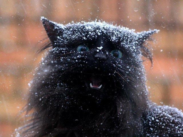 Cat getting snowed on.