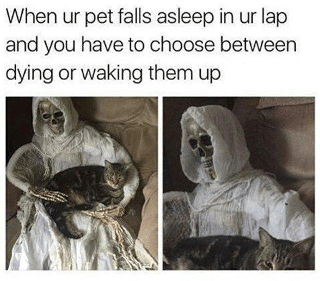 Cat laying on lap of Halloween skeleton.