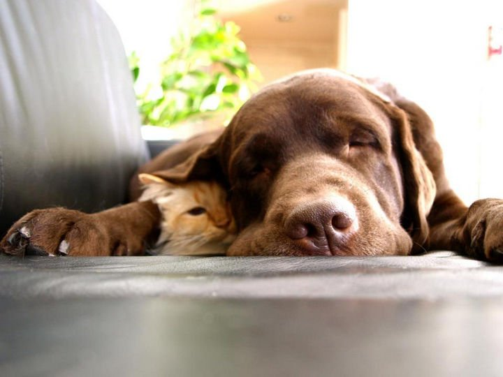 "23 Dogs and Cats Sleeping Together - ""Hi, I"