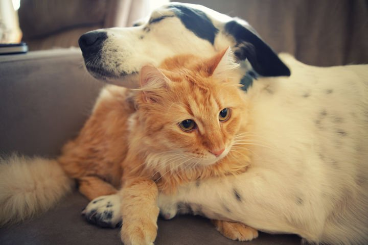23 Dogs and Cats Sleeping Together - Hugs are the best!