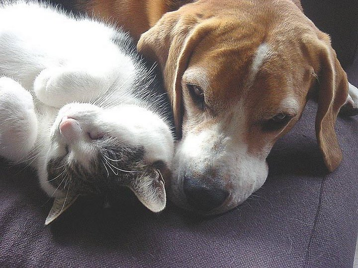 23 Dogs and Cats Sleeping Together - No better place than here.