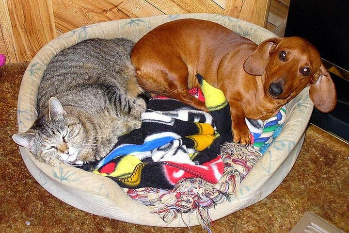 23 Dogs and Cats Sleeping Together - A bed for two. Sharing is caring.