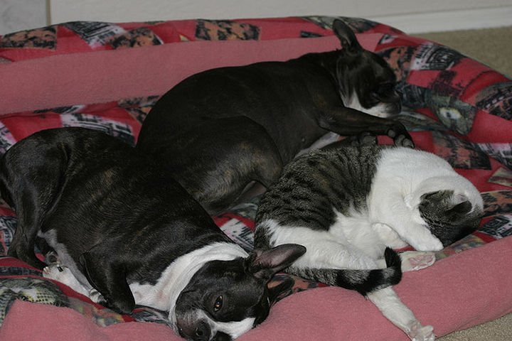 23 Dogs and Cats Sleeping Together - A trio of happiness.
