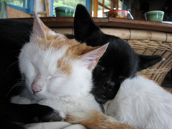 23 Dogs and Cats Sleeping Together - How cute is this?