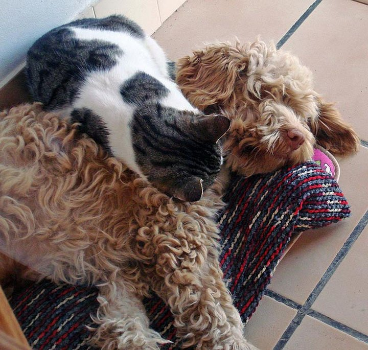 23 Dogs and Cats Sleeping Together - The best place to sleep.