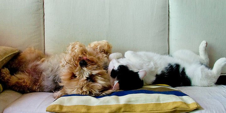 23 Dogs and Cats Sleeping Together - Puppy love.