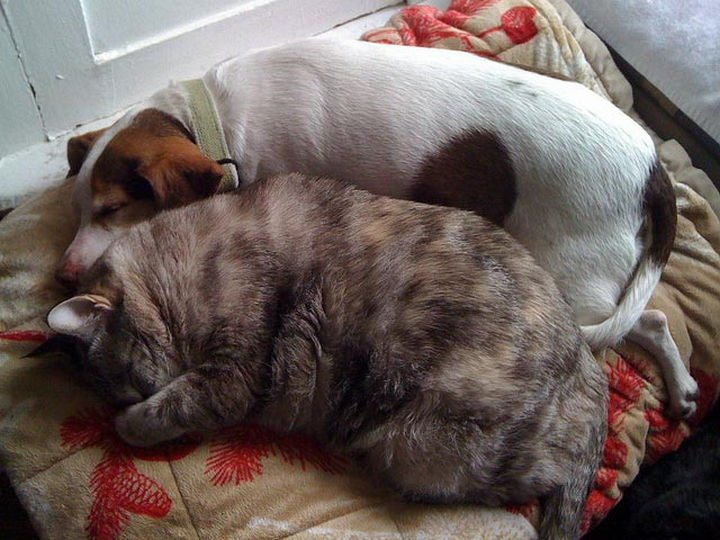 23 Dogs and Cats Sleeping Together - First we rest, then we play!