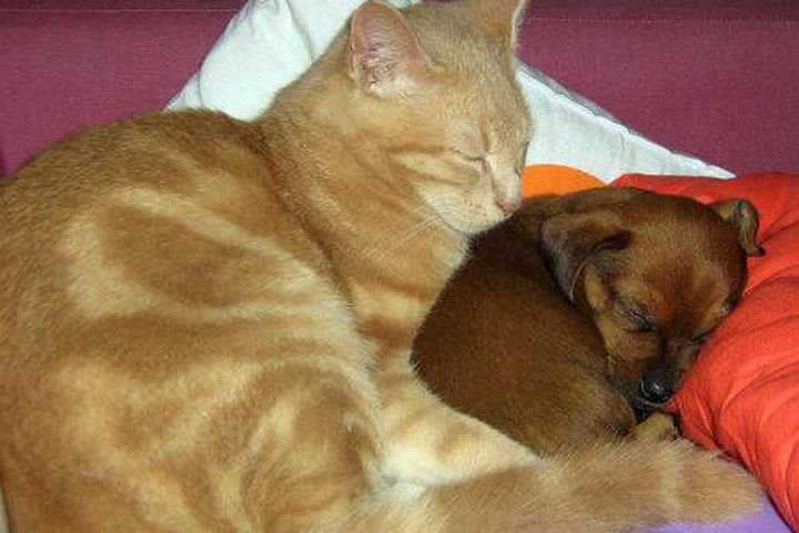 23 Dogs and Cats Sleeping Together - True pals.