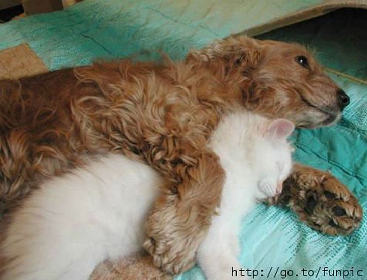 23 Dogs and Cats Sleeping Together - I bet he doesn