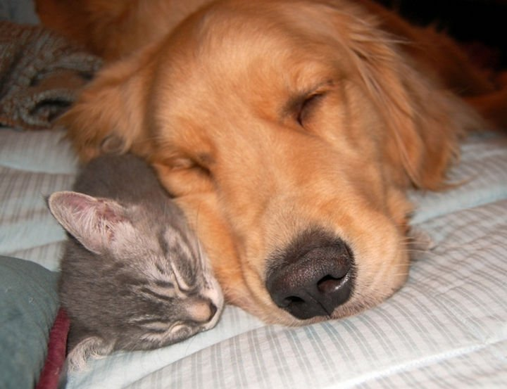 23 Dogs and Cats Sleeping Together - Best friends forever.