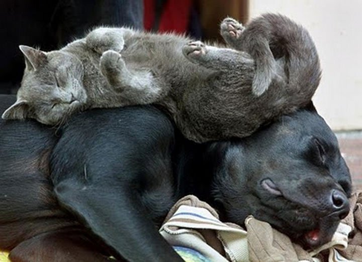23 Dogs and Cats Sleeping Together - Bunk bed buddies.