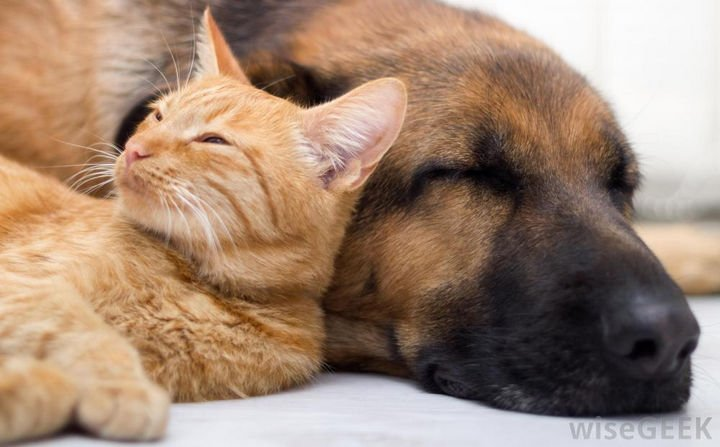 23 Dogs and Cats Sleeping Together - Life is good.