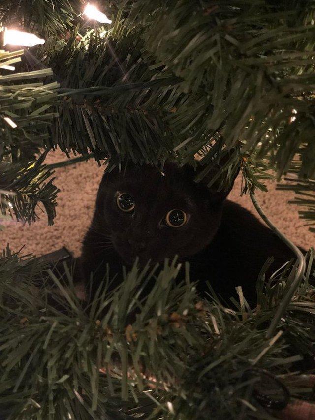 Black cat hiding in Christmas tree