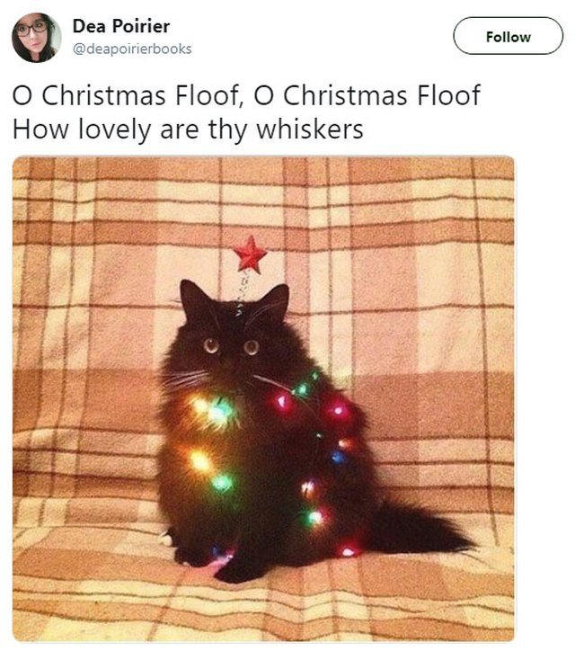 Cat decorated with Christmas lights
