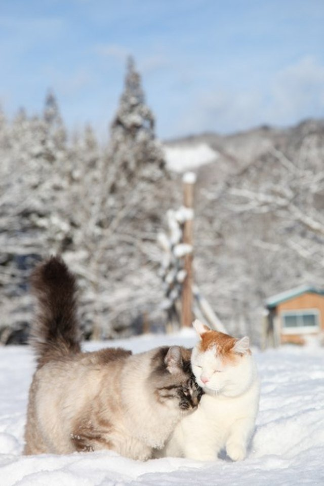 Cats cuddling in the snow.