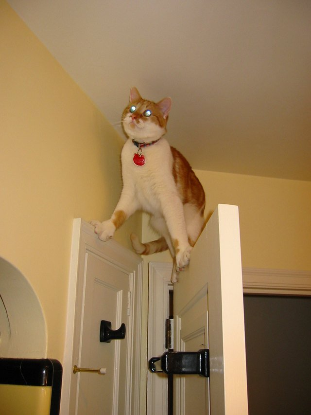 Cat stuck on door frame