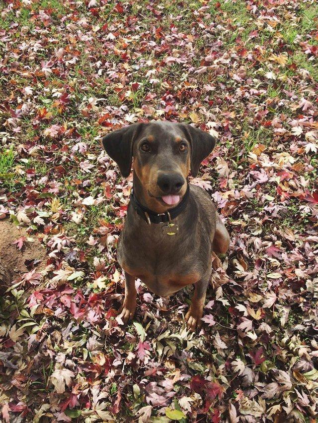 Dog sitting on leaves.
