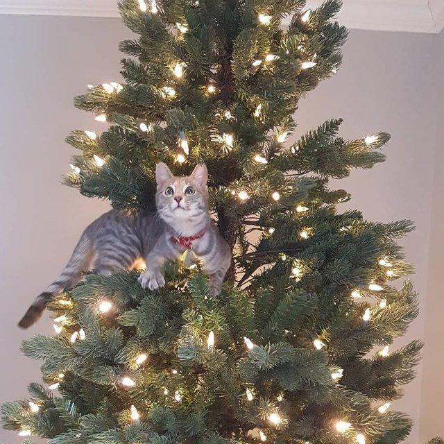 Kitten sitting in Christmas tree