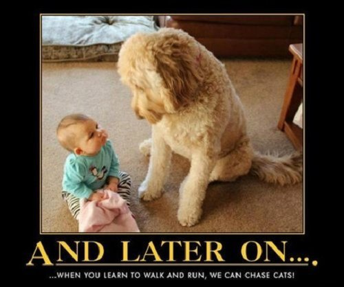 dog meme with baby on floor and cute dog looking at baby with words saying and later on...