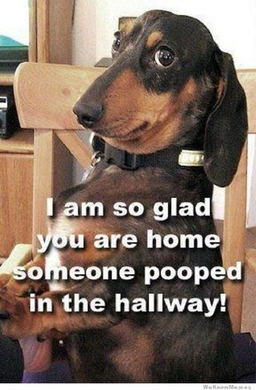 Cute dog meme with words saying I am so glad you are home someone pooped in the hallway