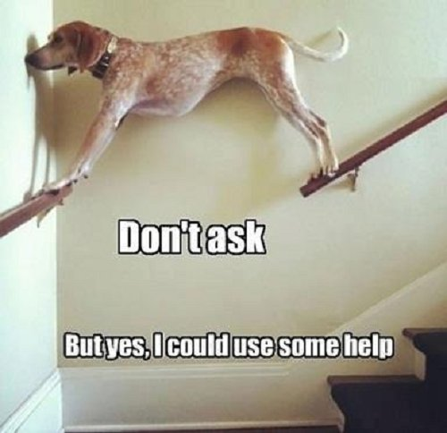 Image of dog on stair rails with words saying Don