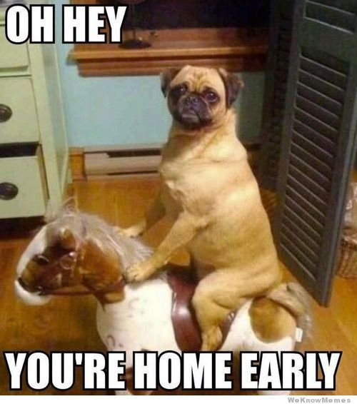 Funny image of pug on rocking horse with words saying Oh hey you