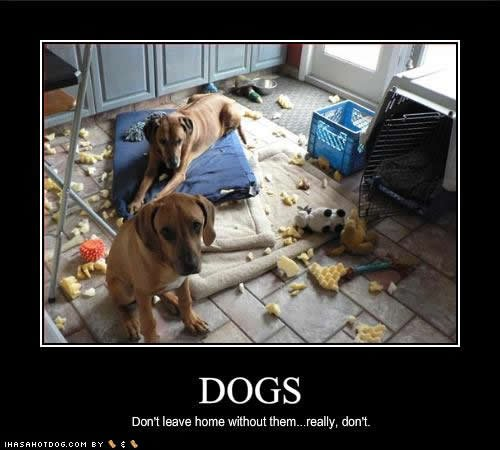 Image of destructive dogs with words saying dogs, don