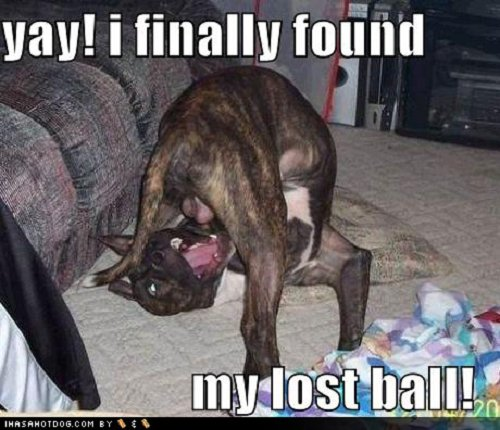 Image of playfull dog with words saying Yay! I finally found my lost ball