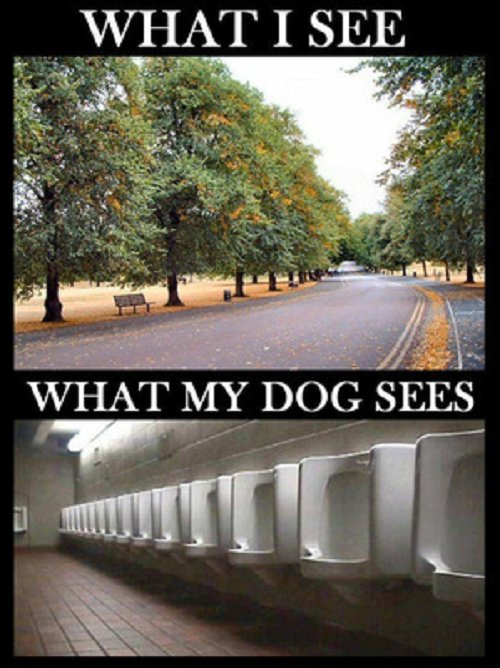 Image what I see what my dog sees