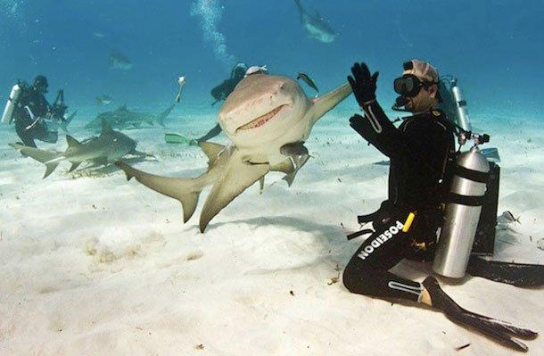 sharkfive