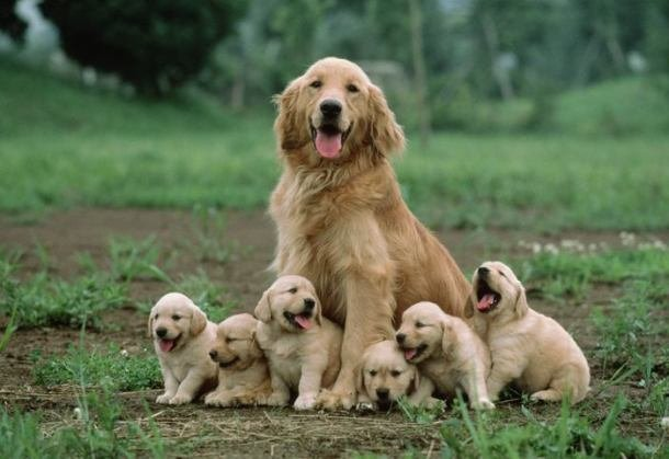 www.aplacetolovedogs.com 001