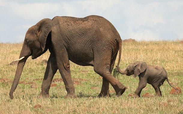 www.outsidethebeltway.com Elephant-and-Baby-Elephant