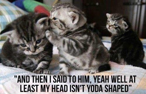 yoda head_tn