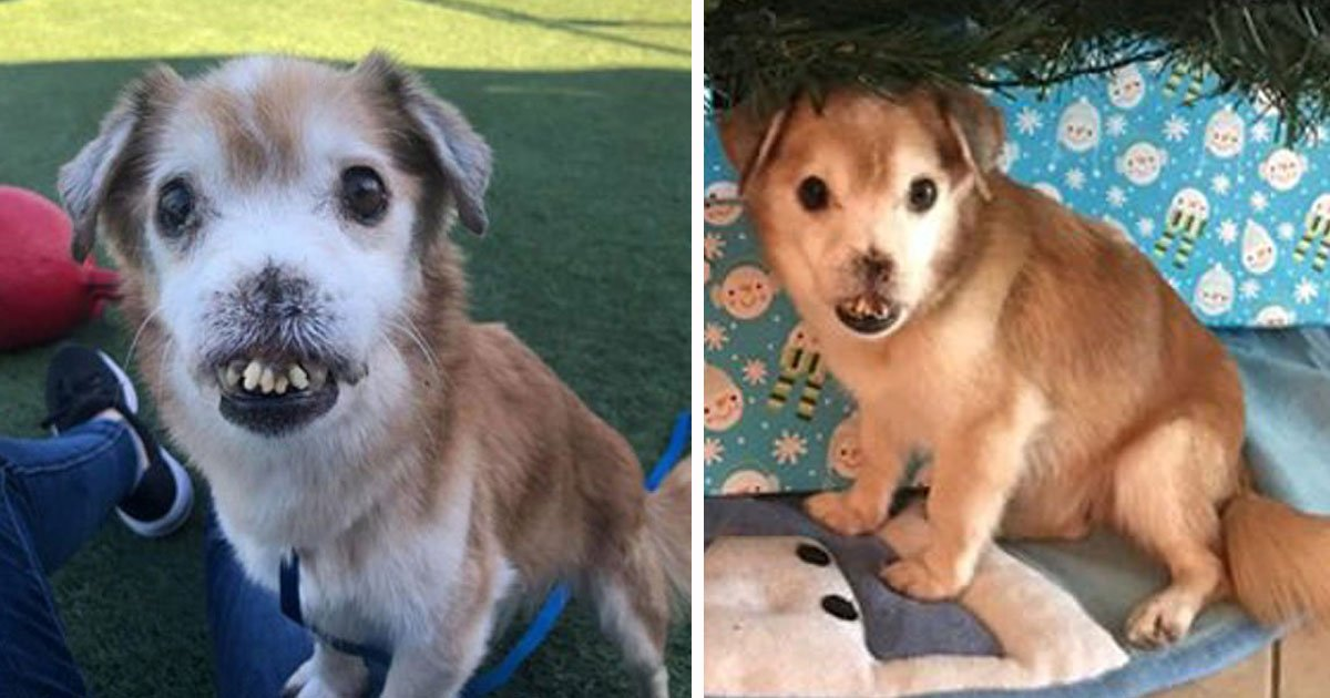 abandoned dog rescued.jpg?resize=1200,630 - Ce chien abandonné qui a perdu son nez est maintenant en lice pour l'adoption