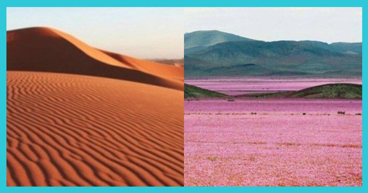 article thumbnail122703.png?resize=412,232 - 사막에 비가 오면 일어나는 일