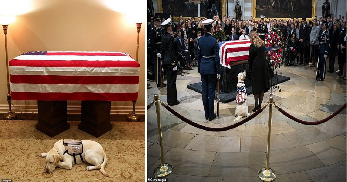 c4.jpg?resize=412,232 - George W. Bush & Wife Laura Make Surprise Return To Capitol Rotunda To Thank Members Of The Public As Bush Sr.'s Service Dog Sully Also Gets The Spotlight