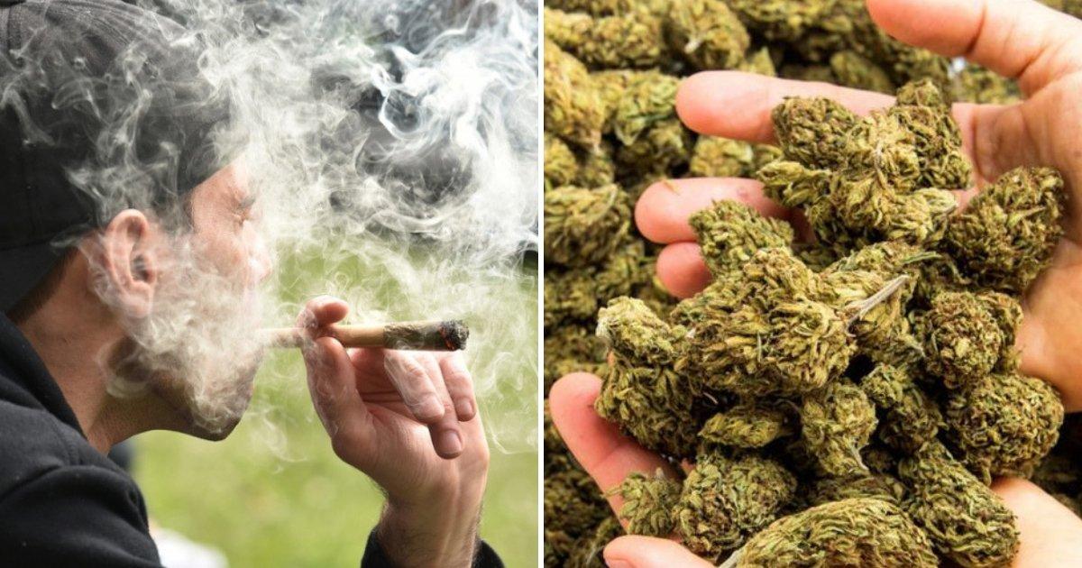 cannabis6.png?resize=300,169 - Les hommes devraient arrêter de fumer du cannabis pendant au moins une demi-année avant de fonder une famille