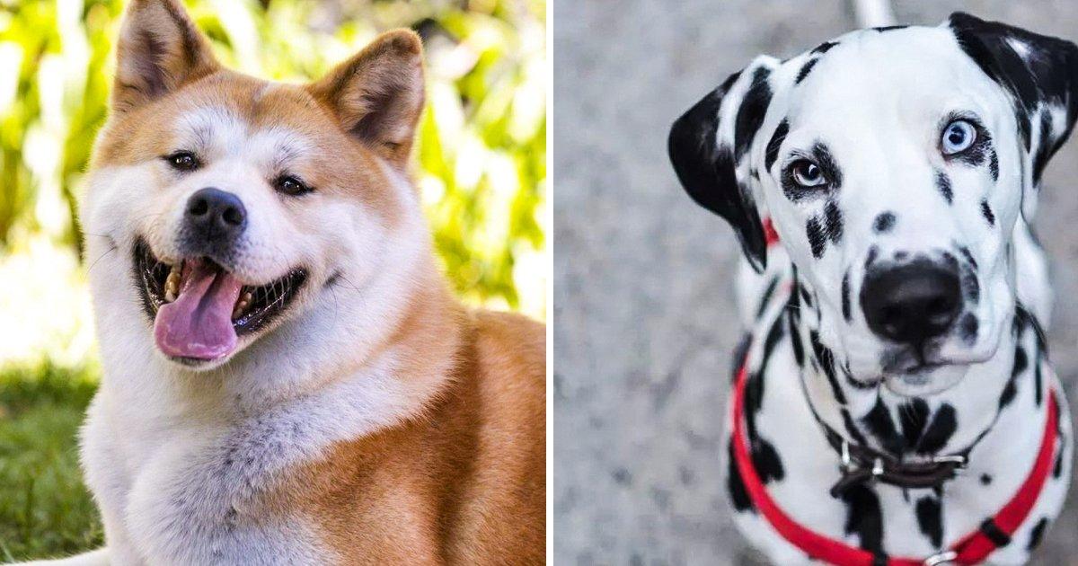 capa16 7.jpg?resize=1200,630 - 10 Raças lindas de cães que em geral não são recomendadas para famílias com crianças