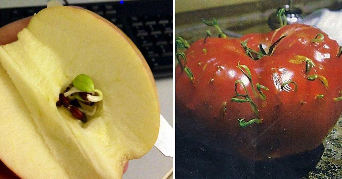 capa4 9 1.jpg?resize=1200,630 - 14 Imagens curiosas mostrando o que acontece quando não se come os vegetais a tempo