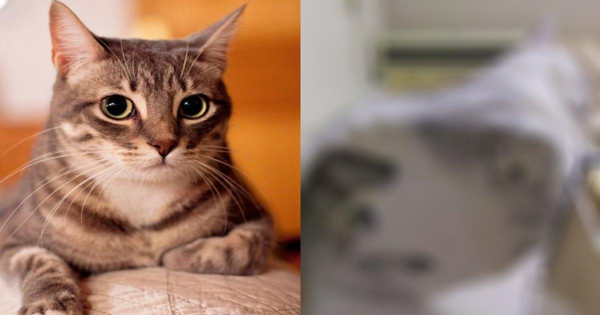 cat 1.png?resize=412,232 - 【この良さがわかれば猫好き確定!】ガラスの上に座る、ペタンとした猫が可愛いすぎる!!