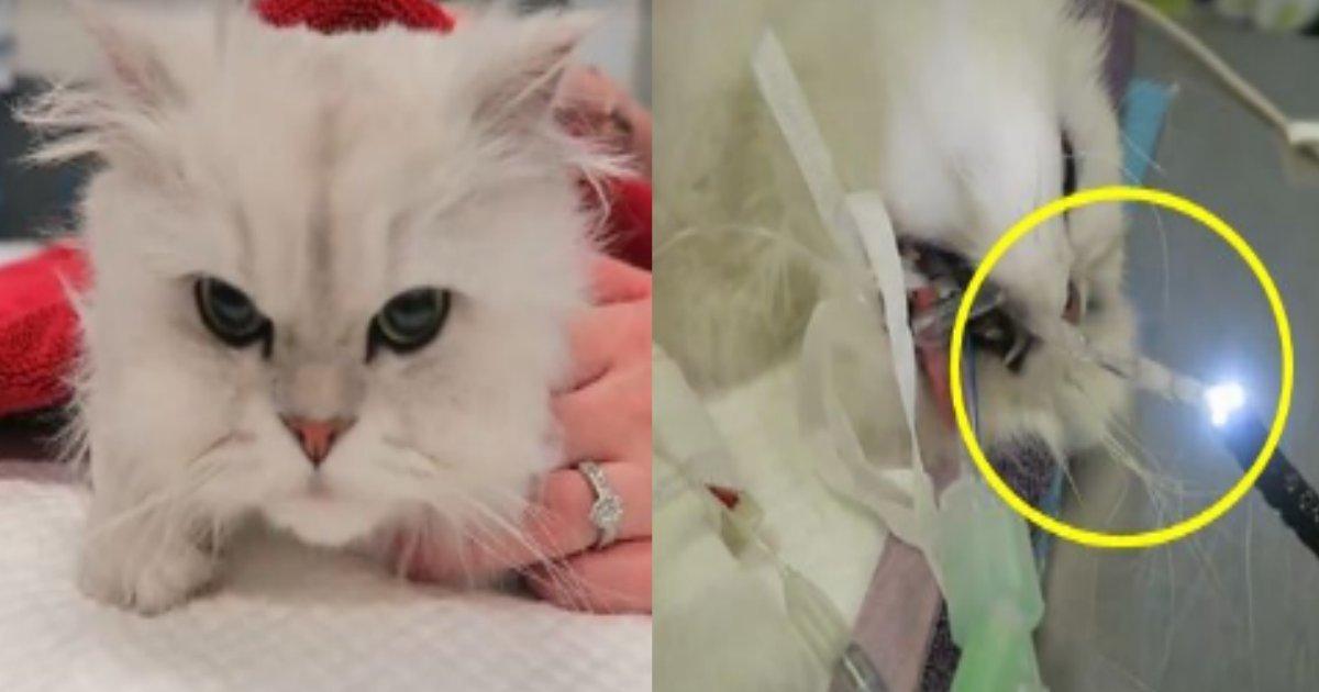 cat.png?resize=412,232 - パーティー用の装飾品を誤って飲み込んでしまった猫、クリスマス期間は特に気を付けて!