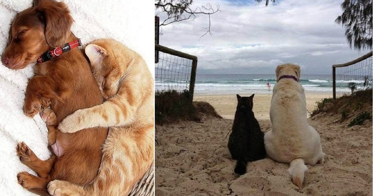 cats and dogs.jpg?resize=412,275 - 14+ Adorable Photos Of Cats Who Fell In Love With Dogs