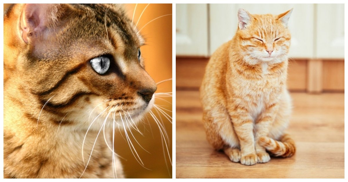 cats.jpg?resize=1200,630 - Cats Protect Their Owners From Ghosts And Negative Influences Around Them
